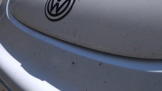 cómo limpiar los insectos del coche en rivas